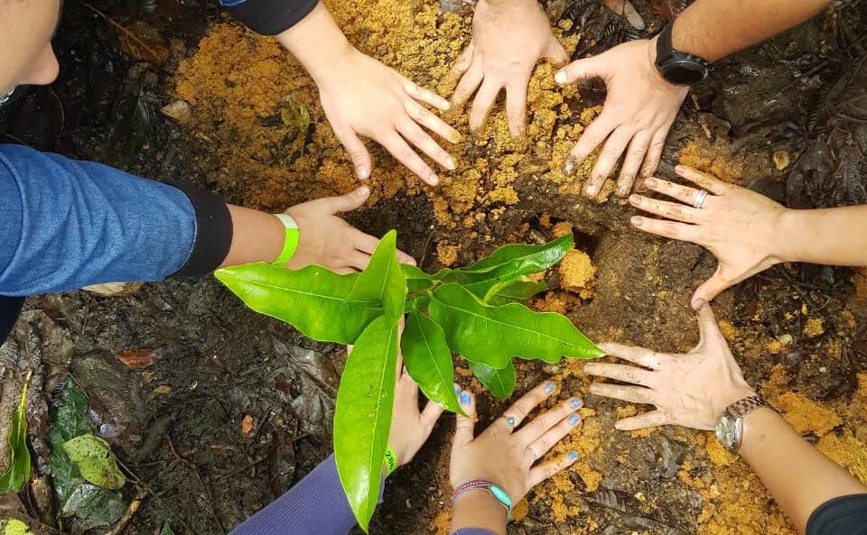 Voluntários realizam o plantio de 260 mudas de árvores na Floresta ...
